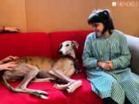 Terapia con Perros para personas con discapacidad intelectual