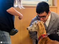 Terapia perros discapacidad intelectual
